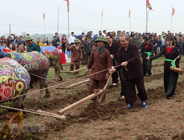 Traditional ploughing festival wishes for bumper harvests hinh anh 1