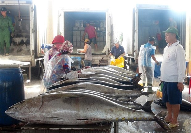 Fishermen in central region enjoy bumper catches during Tet hinh anh 1