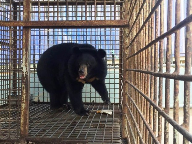 Thousands of Hanoians call for end to bear farming hinh anh 1