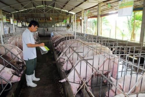 Livestock sector moves to boost exports in 2019 hinh anh 1