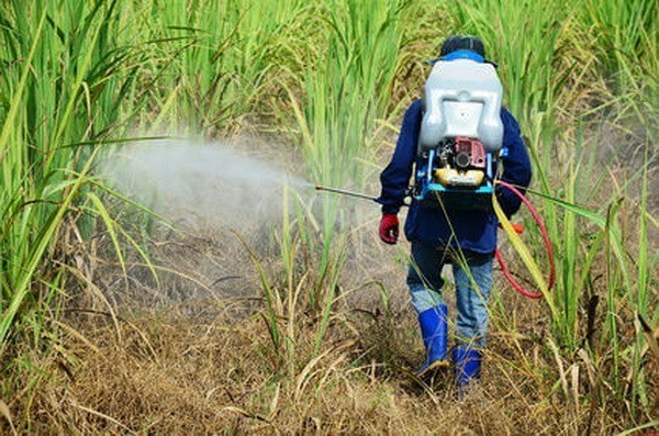 Pesticide products with chlorpyrifos-ethyl, fipronil banned in Vietnam hinh anh 1