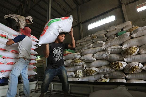 Cambodia's rice exports continue to decline hinh anh 1