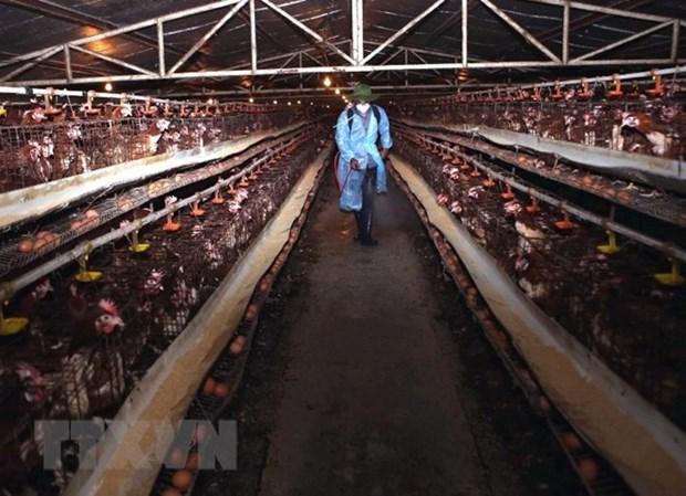 Plan seeks to minimise social, economic impact of bird flu hinh anh 1