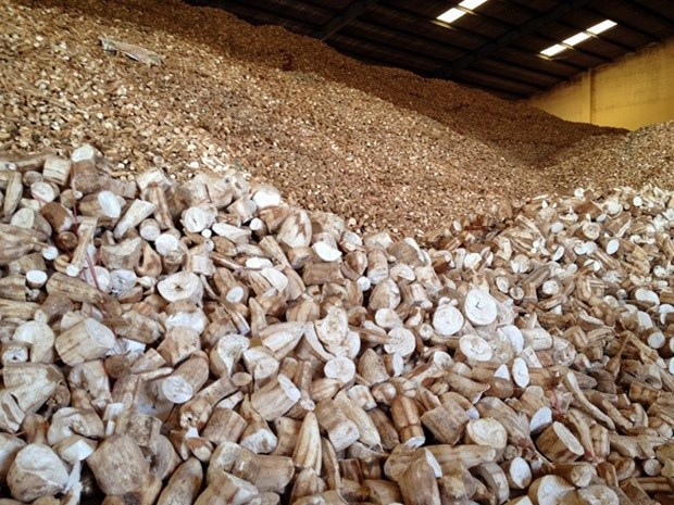 Vietnam to face difficulties in cassava exports hinh anh 1