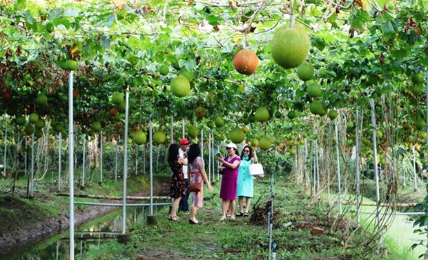 Agri-tourism attracts more visitors to Mekong Delta hinh anh 1