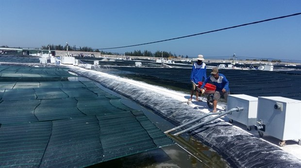Quang Nam province debuts nano-tech shrimp farms hinh anh 1