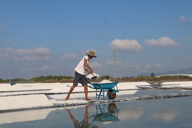 Salt farmers in Ba Ria-Vung Tau rejoice as sun beats down hinh anh 1