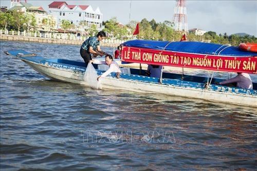 Mass release of aquatic species underway in Kien Giang hinh anh 1