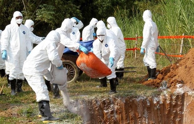 Thai Binh introduces strict control after African swine fever outbreak hinh anh 1