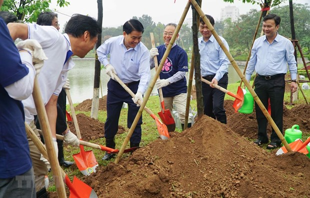 Additional 1,000 cherry blossom trees planted in Hanoi park hinh anh 1