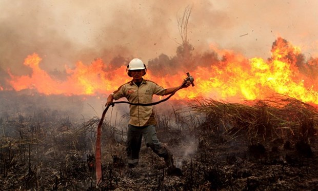 Many forest fire hotspots discovered in Indonesia hinh anh 1