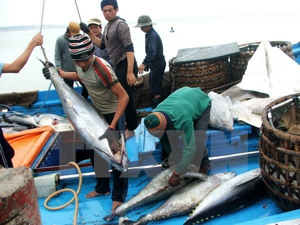 Tuna exports likely to reach 1 billion USD this year hinh anh 1