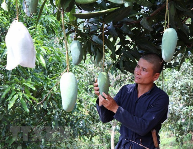 VN asked to enhance quality of farm produce to enter choosy markets hinh anh 1