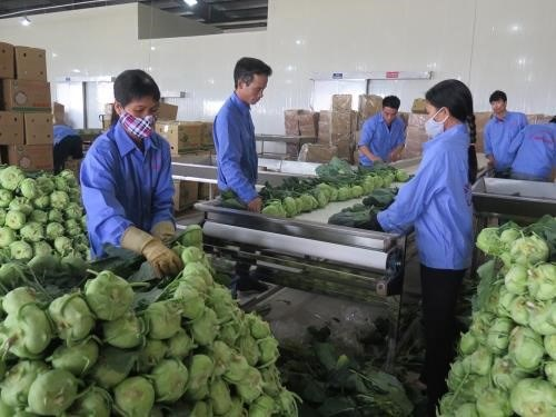 VN shows great potential for processed vegetable, fruit exports hinh anh 1