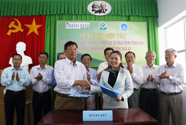 Vinh Long works to increase mango export to US hinh anh 1
