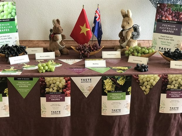 Australia to boost trade ties with Vietnam through table grapes hinh anh 1