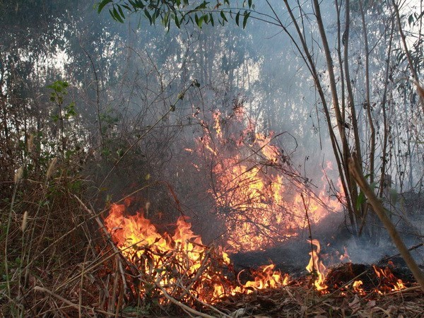Binh Thuan faces high risk of forest fire hinh anh 1