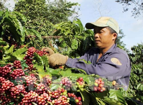 Free coffee for visitors at Buon Ma Thuot coffee festival hinh anh 1