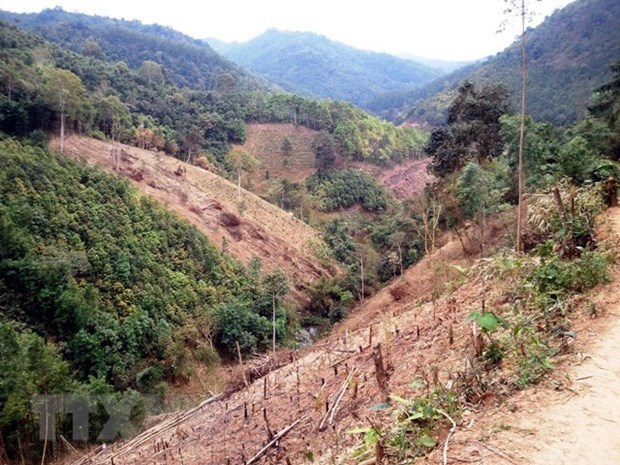 Third stage of Vietnam Forests, Deltas Programme launched hinh anh 1