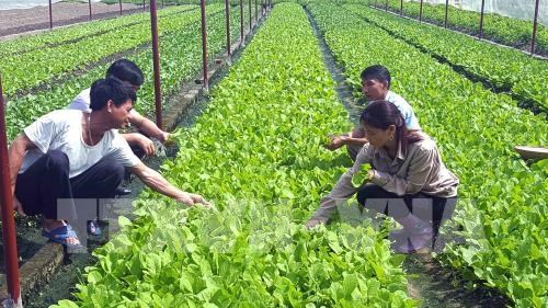 Workshop seeks to help farmers in smart agriculture hinh anh 1