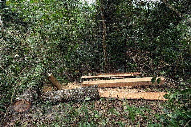 Decline in Vietnam's deforestation cases hinh anh 1