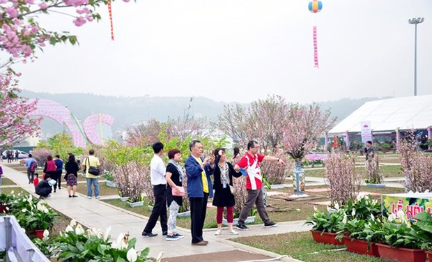 Quang Ninh province to host flower festival hinh anh 1