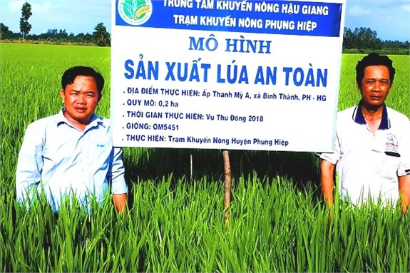 Hau Giang to pilot smart rice cultivation hinh anh 1