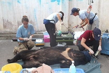 Three captive bears in Dong Nai sent to sanctuary hinh anh 1