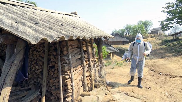 Efforts augmented to contain African swine fever epidemic hinh anh 1