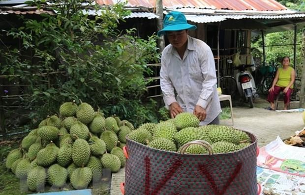 High potential for fruit, vegetable exports to China hinh anh 1