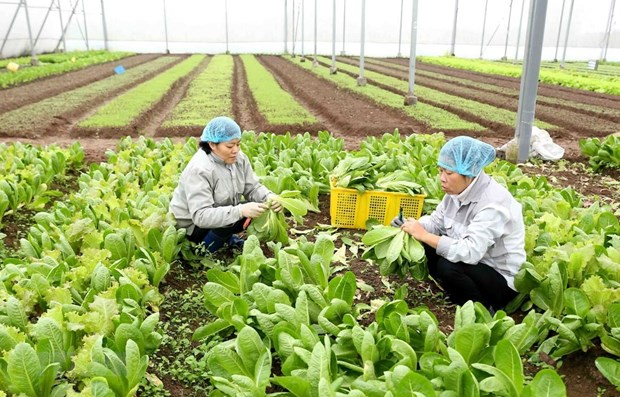 More investment in processing key to boost fruit, vegetable export hinh anh 1