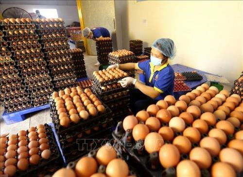Vietnamese, Japanese companies ink raw egg distribution deal hinh anh 1