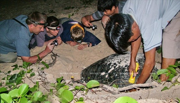Con Dao National Park – nesting haven for sea turtles hinh anh 2