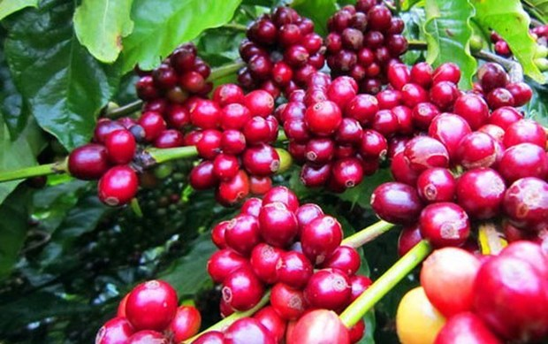 Vietnam attends international coffee, tea expo in Singapore hinh anh 1