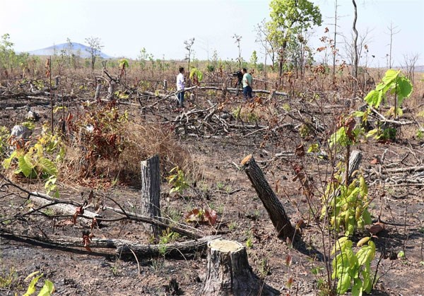 Forest illegally cut down along National Road 29 ahead of construction hinh anh 1