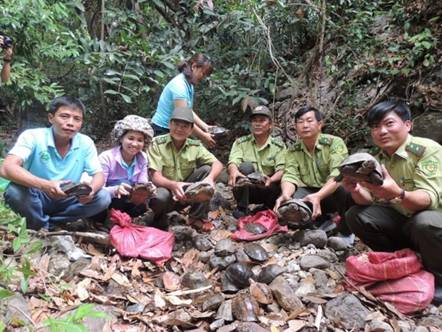 Over 80 wild animals reintroduced at national park hinh anh 1