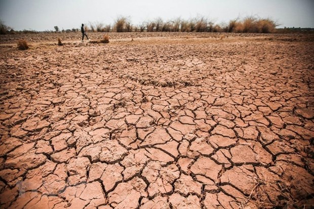 Central Highlands province struggles with prolonged drought hinh anh 1