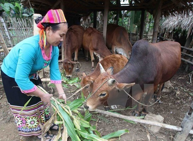 Dien Bien sees strong performance in poverty reduction hinh anh 1