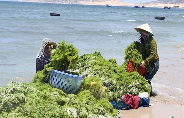 Marine economy makes up 10 percent of Vietnam's GDP hinh anh 1