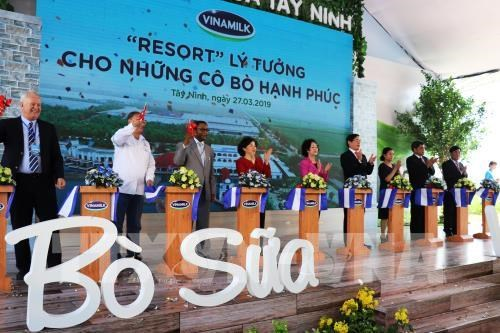 Vinamilk inaugurates Vietnam's largest dairy cow farm in Tay Ninh hinh anh 1