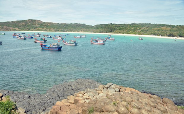Phu Yen releases breeding shrimp, fish into the sea hinh anh 1