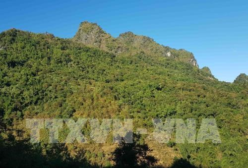 Vietnam home to nearly 14.5 million ha of forest hinh anh 1