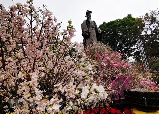 Japanese cherry blossom festival opens in Hanoi hinh anh 1