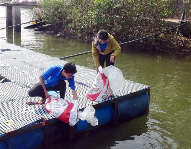 Ba Ria-Vung Tau releases breeding shrimp, fish into nature hinh anh 1