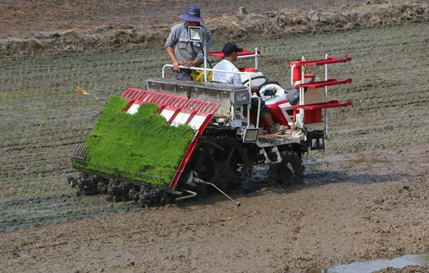 First smart rice cultivation model piloted in Hau Giang hinh anh 1