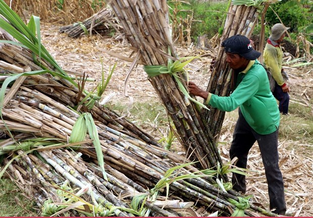Sugar industry could be sweeter with restructuring hinh anh 1