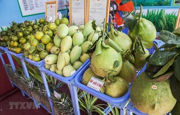 Tien Giang enjoys rising fruit exports hinh anh 1