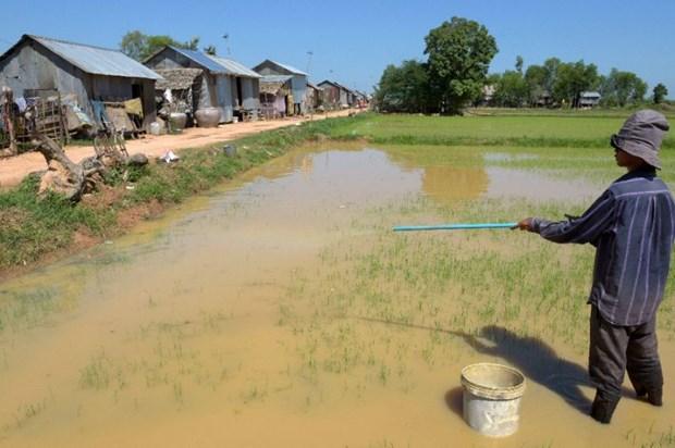 Cambodia to sue EU over rice tariff hinh anh 1
