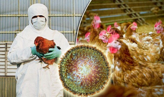 Cambodia reports first outbreak of H5N6 bird flu hinh anh 1