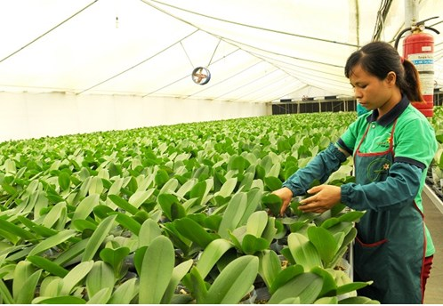 Hanoi helps bring farmers into 21st century with technology hinh anh 1
